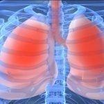 Anatomy Monday: Respiratory System