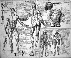L0011864 Anatomical sketches after Valverde; muscles. Credit: Wellcome Library, London. Wellcome Images images@wellcome.ac.uk http://wellcomeimages.org Anatomical sketches after Valverde; muscles. Pen and Ink early 17th century Juan de Hamusco Published: - Copyrighted work available under Creative Commons Attribution only licence CC BY 4.0 http://creativecommons.org/licenses/by/4.0/