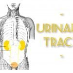 Anatomy Monday: Urinary Tract